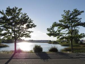Lac de Saint- Chamand, Avignon. Cliché: M.Maire
